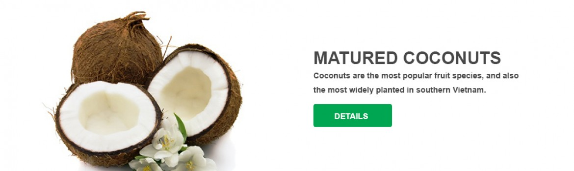 Matured Coconuts